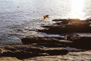 portonovo-pontevedra-sol-agua-mar-aves-marinas-gaviotas-rocas-sanxenxo