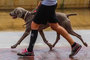 perro-pasea-dueno
