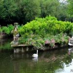 estanque-pazo-oca-cisne-pontevedra