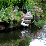 ganso-estanque-pazo-oca-pontevedra