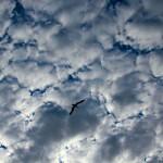 cielo-nubes-ave-volando