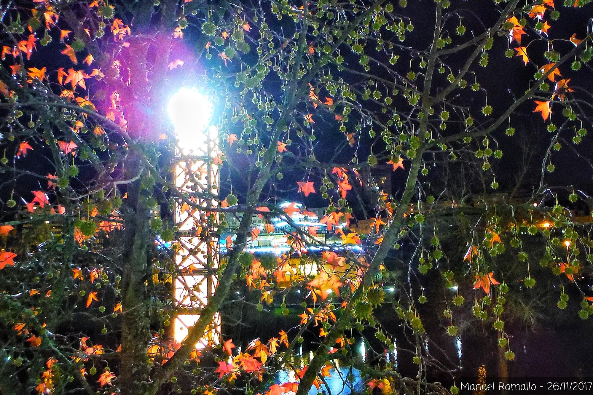 parque-noche-otono-hojas-rojas