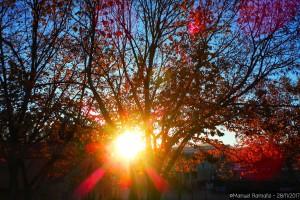 sol-atardecer-otono-hojas-arbol-parque