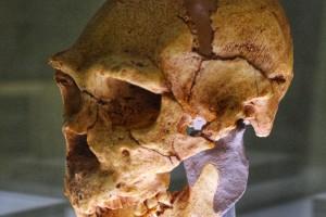 homo-heidelbergensis-atapuerca-miguelon-400000-anos-antiguedad
