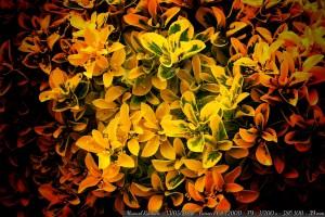 hojas-arbusto-primavera-verde-amarillo-rojizo