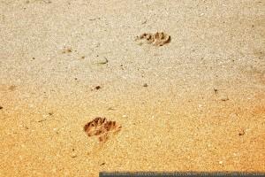 huellas-en-la-arena-playa-america-pontevedra