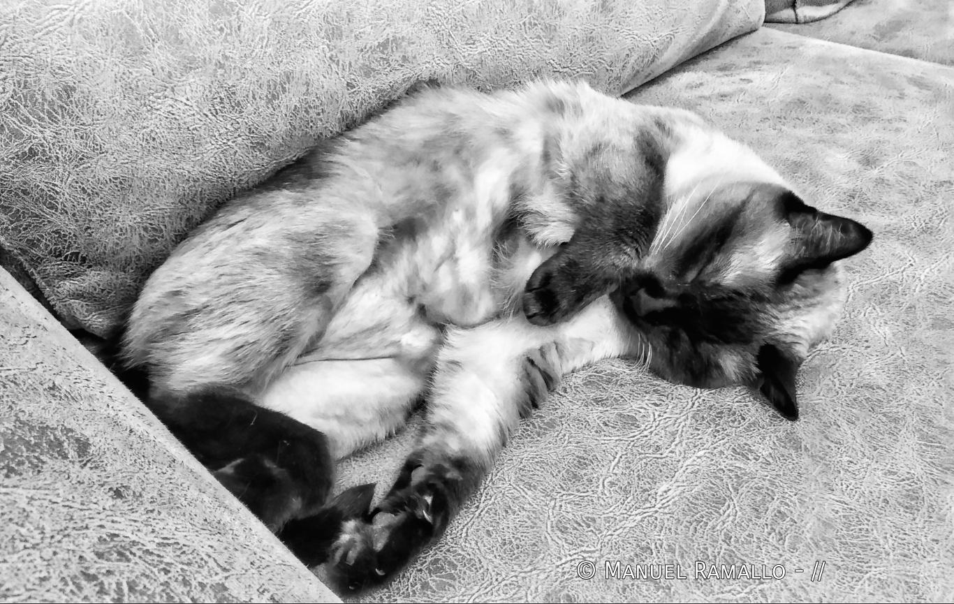 Clio durmiendo