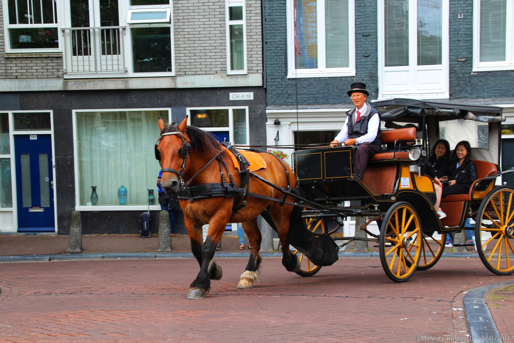 Carruaje de caballos en Ámsterdam